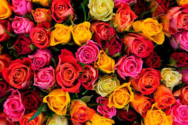 different color roses guys be careful the color of a means different things