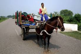 indian cart horses in india being subjected to abuse for antitoxins