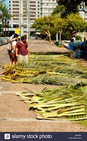 used sukkah for sale palm leaves or branches used to cover the sukka on sale at the