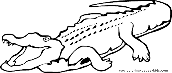 crocodile color animal coloring pages plate bebo pandco
