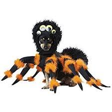 Spider Halloween Costume Dogs Amazon Zack U0026 Zoey Fuzzy Tarantula Costume Dogs 20