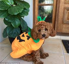 Kmart Halloween Costumes Girls Kmart Released Halloween Costumes Pets Daily Mail
