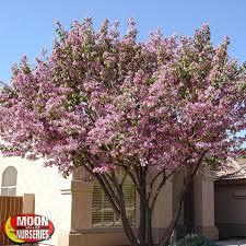 flowering trees moon valley nurseries