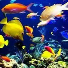 2017 global ornamental fish feed market upec tetra