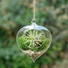 hanging glass heart vase air plant terrarium by dingading