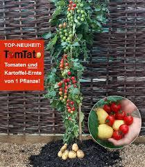 Tropische Pflanzen Im Garten Süßkartoffeln Anbauen Mein Schöner Garten