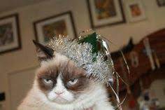 Grumpy Cat New Years Meme - photos of grumpy cat a little blurry but here is baby grumpy cat