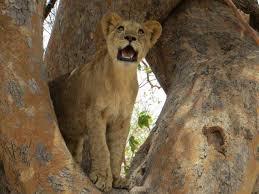 Indiana wildlife tours images The sights of senegal fathala wildlife reserve indiana jo jpg