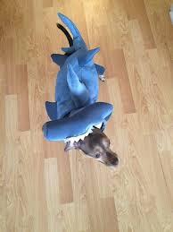 Dog Shark Halloween Costume 33 Pets Halloween Costumes Flaunt Unique Halloween Style