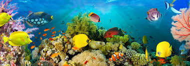 00860 sea corals wizard genius world of wall murals and wall 00860 sea corals wizard genius world of wall murals and wall decoration wizard genius world of wall murals and wall decoration