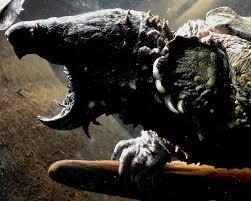 alligator snapping turtle hd wallpapers wallpapersin4k net
