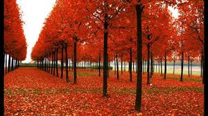 the beautiful colors of fall 2014 most beautiful trees hd 2015