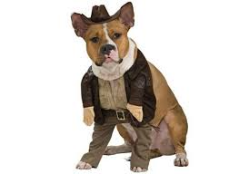 Funny Halloween Animal Costumes 45 Pooch Parade Costumes Images Pet Costumes