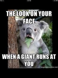 Koala Meme Generator - best skyrim memes album on imgur
