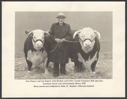 names of cattle breeds listing of mini cattle breeds cows