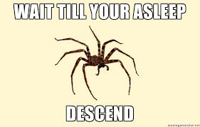 Huge Spider Memes Image Memes - huge spider memes image memes at relatably com