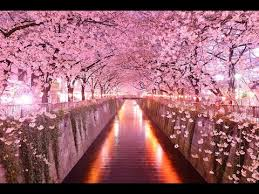 top 10 most beautiful tree tunnels in the world