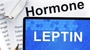 why you need to learn about leptin if you are overweight