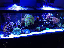Reef Aquarium Lighting What Type Of Lighting Are You Currently Running Over Your Reef