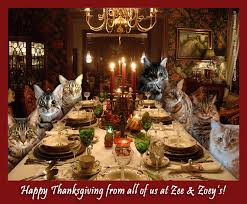feeling grateful and happy thanksgiving from zee zoey s cat