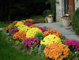 garden pathway ideas for fall fall mums backyard and plants