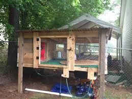 new duck pen backyard chickens