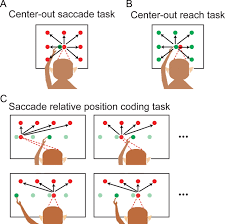 a relative position code for saccades in dorsal premotor cortex