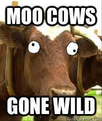 Moo Meme - moo cows gone wild moo cows gone wild quickmeme