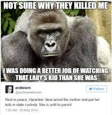 Gorilla Meme - internet meme demolition derby the gorilla edition grounded parents