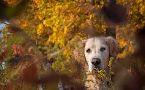 cute fall wallpapers fall with animal full hd wallpapers shu shu wallpaper