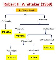 taxonomy biology4isc worksheets releaseboard free printable