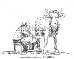 sketch woman milk cow by hand stock vector 311601854 shutterstock