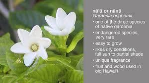 native plants to hawaii five easy native hawaiian landscaping plants on vimeo