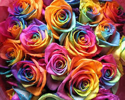 colored roses rainbow colored roses pixdaus