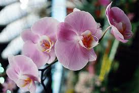 pictures of orchids how to care for orchids and help them bloom new today