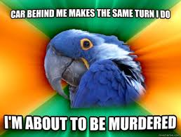 paranoid parrot meme guy