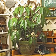 15 best low light houseplants images on pinterest interior