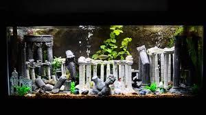 75 gallon theme aquarium
