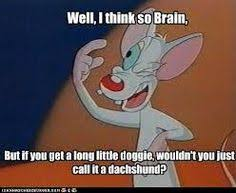 Pinky And The Brain Meme - i miss pinky and the brain brain cartoon and sons