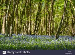 south east england kent woodlands spring trees flowers