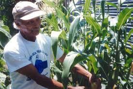 Houston Urban Gardeners - community gardening learn to grow in many ways houston chronicle