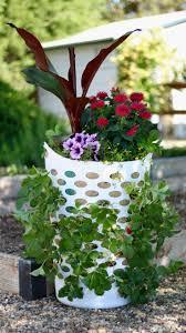 in door plant put in pot vide 34 best garden advice videos images on pinterest garden ideas