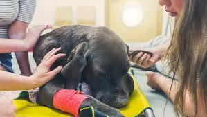 dog euthanasia dog euthanasia dogtime
