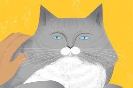 thanksgiving cat gif motion sam kalda illustration