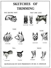 silky terrier with haircut ideas about yorkie haircut guide cute hairstyles for girls