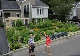 saved a front yard vegetable garden in quebec gardener u0027s journal