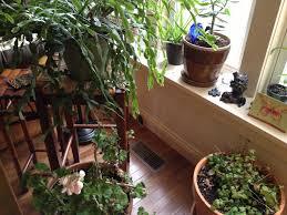 indoor garden laura bruno u0027s blog