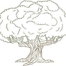 Large Tree Coloring Page Kids Drawing And Coloring Pages Marisa Tree Coloring Pages