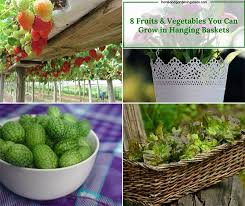 fruit and vegetable baskets 8 fruits vegetables you can grow in hanging baskets home and