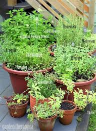 Herb Garden Pot Ideas Grow Your Own Perennial Container Herb Garden Hometalk